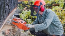 Chainsaw ​Safety safety course